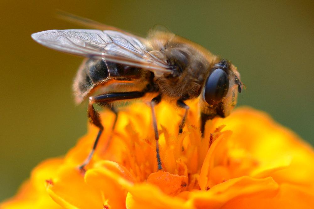 Bee (side)