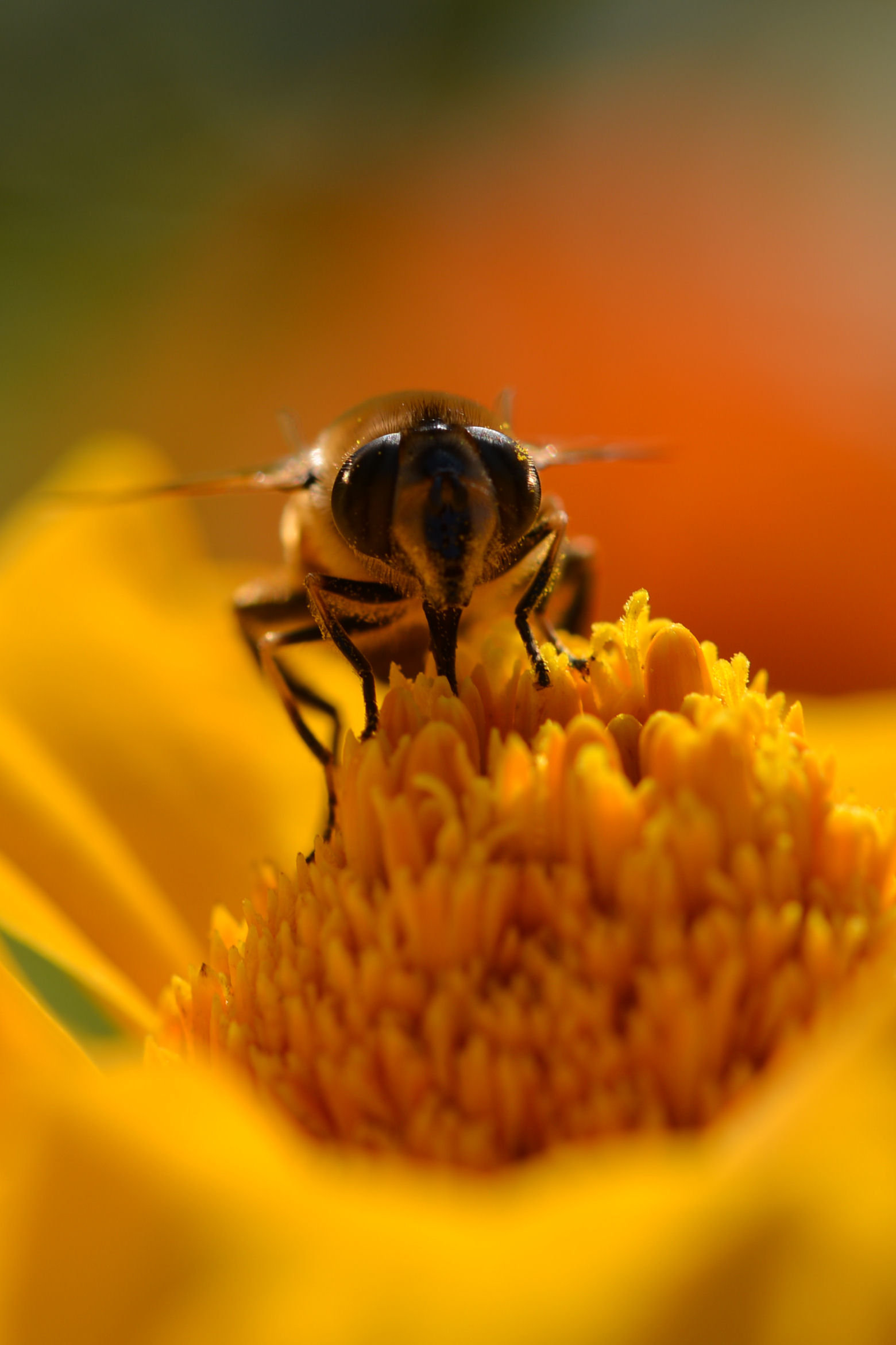 Bee (portrait)